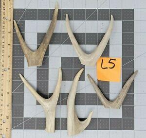 5 Real Mule Deer Antlers Forked Tines DIY Jewelry Hangers Crafts Lot