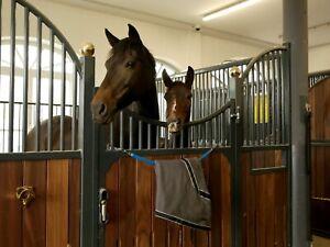 Deckenhalter, Halter für Pferdedecke, verzinkte Kette mit 2 Karabinern