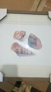 """NEW Pottery Barn Framed 20"""" x 16"""" Shell Collection Print #2-DISCOUNT"""