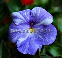 Achimenes RF's NEXT GEN rhizome African Violet kin