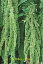 Amarant *Smaragd* 150 Samen *Amaranth Samen *Sorte aus Ukraine *Amaranth seeds