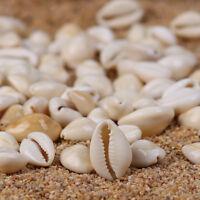 100Pc natürliche kleine Muschel Cowrie Cowry Beach Perlen für DIY Schmuck machen