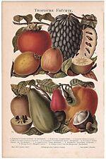 Original-Lithographien (1800-1899) aus Europa mit Blumen- & Pflanzen-Motiv