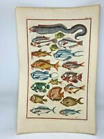 1718 Superbly Hand Colored Fish Print Jonston & Ruysch Engraving #15