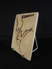 Replica fossil dinosaur, museum cast, Pterosaur, bird fossil Pterodactylus