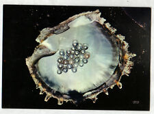 TUAMOTU (POLYNESIE) PERLES de CULTURE / Carte postale
