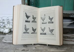 Poultry Breeding Book Antique 1932 Illustrated Vintage Chicken Science Series