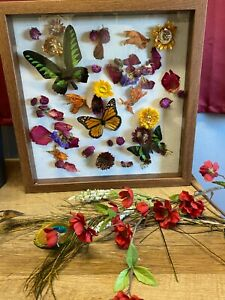 Real Butterflies with Dried Flowers Shadow Box