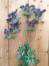 Bunch of Purple Artificial Cow Parsley Silk Flowers, Realistic Faux Dill Anethum