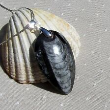 Beautiful Polished Orthoceras Fossil Pendant with Silver Plated Snake Chain