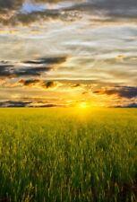 5x7 Sunrise Backdrop Curtain For Photo Background Studio Vinyl Photography Prop