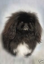 Pekingese A6 Blank Card Design No 11 By Starprint