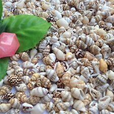 50 Pcs Decorative Natural Shells Mini Sea Conch Nautical Decor DIY Crafts 5-10mm