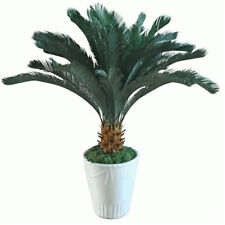 10pcs Sago Palm Tree Seeds Cycas Revoluta Tropical Green Plants Bonsai