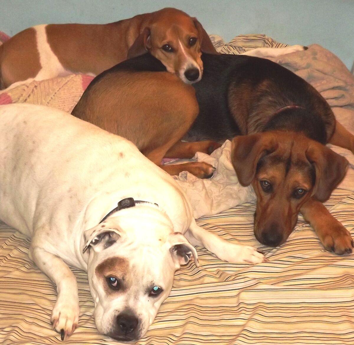Three Dog Variety Store
