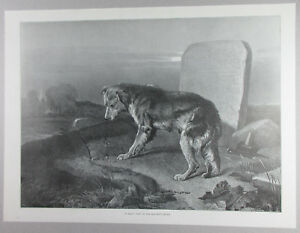 FAITHFUL COLLIE DOG VISITING MASTER'S GRAVE IN CEMETERY ANTIQUE ENGRAVING