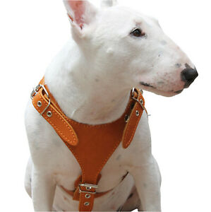 "Genuine Leather Dog Harness Excercise Bullterrier Boxer Amstaff 25- 30"" chest"