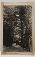 Bayville Maine, Woods Path to  Bayville Photo View UDB Postcard C19