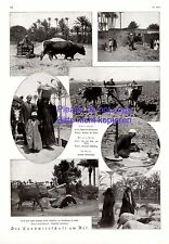 Agriculture on the Nile Egypt 1925 XL Side with 7 fotoabb. +