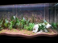 4 Wasserpflanzen (4,98€/Stk) Barsch Set, robuste Arten im Topf, Aquarienpflanzen