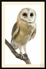 Owl 1024, Cross Stitch Kit