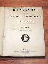 Seltenheit! 1840 Règne Animal von J. Achille Comte , komplett alle 89 Tafeln !