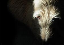 Hairy lurcher greeting card, note, greyhound whippet saluki birthday photo art