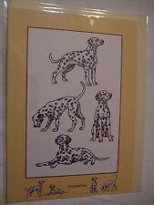 CARTE + ENVELOPPE - chien   DALMATIEN