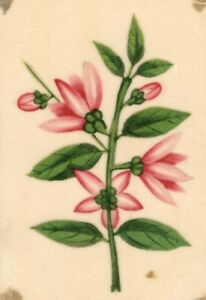 Pink Flowers Pith Painting – Original early 19th-century watercolour painting