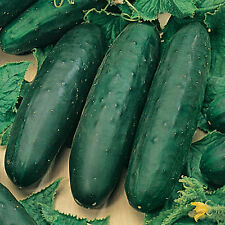 """Marketmore 76 Cucumber *Heirloom* (50 Seed's) """"FREE SHIPPING""""<Non-GMO>"""