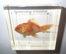 Labelled Goldfish 7 labels in Clear Paperweight Education Animal Specimen