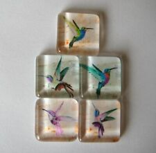 Nice Oh Fun Hummingbird Themed Square Glass Magnets Set of 5