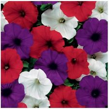 ~ Easy Wave THE FLAG Mix * Trailing Petunia * 20 Pelleted Seeds