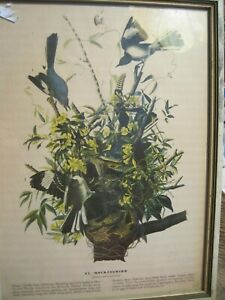 VTG MOCKINGBIRD Art Print by James Audubon-WOOD FRAMED 1930s?  9.5x 13""