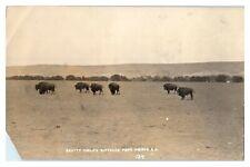 RPPC Scott Philips Buffalos, Fort Pierre, SD Real Photo Postcard *6E(3)14