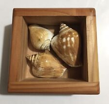 Made in Washington Wooden Box With Shells Hang Or Table Display Beach Decor
