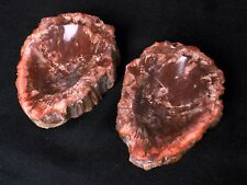 Hot Sale 2Pcs PETRIFIED WOOD Ashtray From Madagascar For Gift