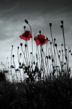 """Black White Grey Red Canvas Picture Poppy Field 16""""X20"""" Wall Art Flower Prints"""