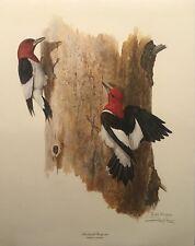 Ray Harm Red Headed Woodpecker Print