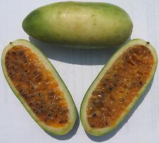 Passiflora mollissima 10 seeds