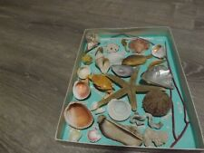 Vintage Boxed Sea Shell Collection - Named Shells Mounted In Box 30 Kinds