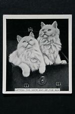 Cats In Bag       Original  1930's Vintage Photo Card  VGC