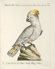 "Saverio Manetti : ""Yellow-crested Cockatoo"" (1767-1776) — Giclee Fine Art Print"