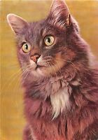 BF38750  cat chat animal animaux