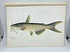 Original Antique Denton Fish Print Channel Catfish