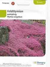 Feldhtymian Thymus serpyllum Sandthymian Bienenweide Polsterstaude 200 Pflanzen