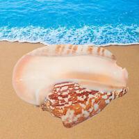 Natural Shell Conch Phoenix Ear Conch Coral Sea Beach Ornament Fish Tank Decor