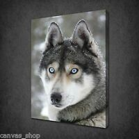BEAUTIFUL BLUE EYES HUSKY DOG WALL ART CANVAS PRINT PICTURE READY TO HANG