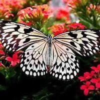 600+ BUTTERFLY MIX WILDFLOWERS SEEDS BEAUTIFUL POLLINATORS HUMMINGBIRDS BEES USA
