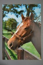 R&L Modern Postcard: Horse Head Portrait 1980s